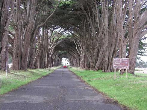 Tree tunnel entering Point Reyes, California station KPH