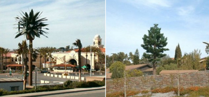 Faux trees concealing urban wireless antennas for zoning compliance - Spaceandculture