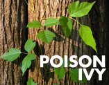 how to protect workers from poison ivy and poison oak